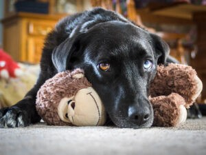 7 Best Dog Toys to Keep your dog out of Boredom