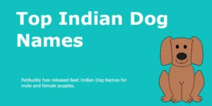 Indian Dog Names Ideas for Male & Female Puppies