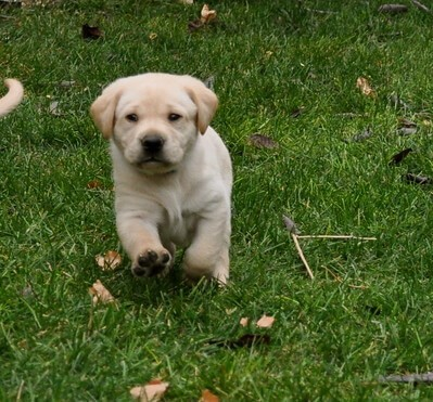 Top 10 Dog Breeds in India