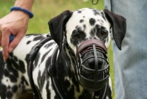 Is Muzzling a dog Bad? When You Shouldn't Muzzle a dog